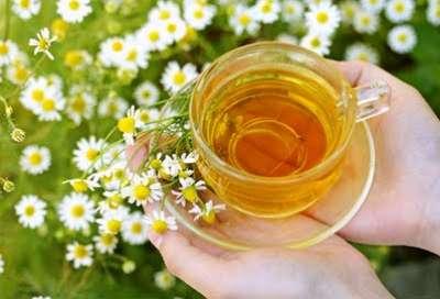 زهرة البابونج ، شاي البابونج