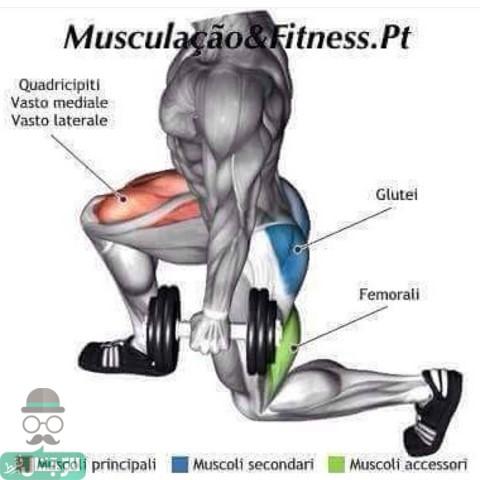 عضلة الجلوتس
