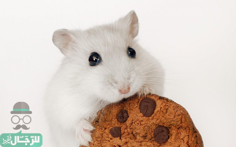 التخلص من الفئران بطرق فعالة وإنهاء حالة الطوارئ في المنزل