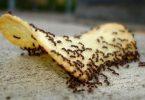 التخلص من النمل ،، تعرف على أسباب تواجد النمل في المنزل وطرق التخلص منه