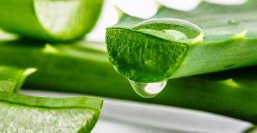 فوائد الصبار للبشرة و الشعر و العناية بالأسنان وشفاء الجروح