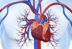 تحليل إنزيمات القلب