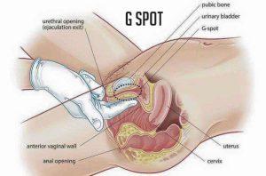 ما هي منطقة الجي سبوت؟ وأين توجد G-spot؟